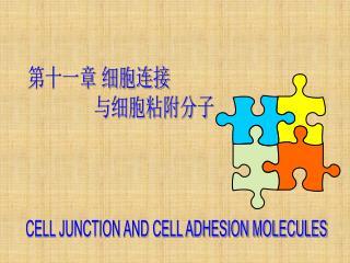 第十一章 细胞连接                        与细胞粘附分子