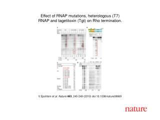 V Epshtein  et al. Nature 463 , 245-249 (2010) doi:10.1038/nature08 669