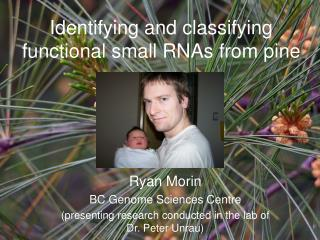 Identifying and classifying functional small RNAs from pine