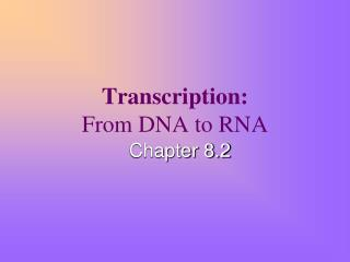 Transcription: From DNA to RNA