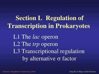 L1 The lac operon