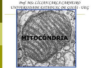 MITOC�NDRIA