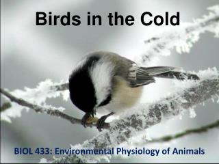 Birds in the Cold