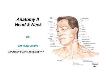 Anatomy II  Head & Neck BY: DR.Yahya Alfarra CANADIAN BOARD IN DENTISTRY