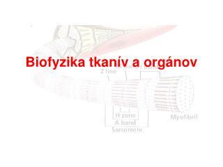 Biofyzika tkanív aorgánov