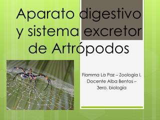 Aparato digestivo y sistema excretor de Artrópodos