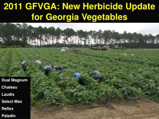 2011 GFVGA: New Herbicide Update for Georgia Vegetables