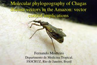 Molecular phylogeography of Chagas disease vectors in the Amazon: vector control implications