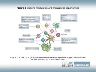 Figure 3  Immune modulation and therapeutic opportunities