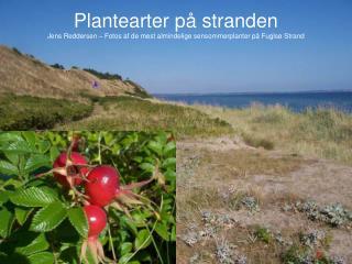 Mos : ( ? )Helt lave brungr�nne planter � som t�ppe p� jorden