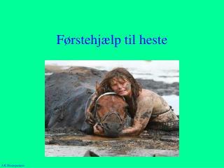 Førstehjælp til heste