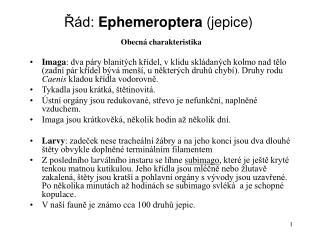 Řád:  Ephemeroptera  (jepice)