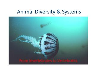 Animal Diversity & Systems