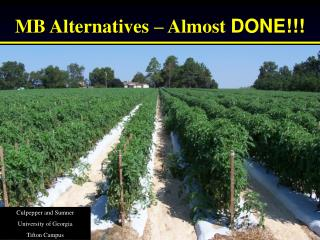 MB Alternatives � Almost  DONE!!!