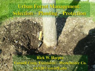 Urban Forest Management:  Selection – Planting – Protection