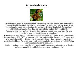 Arborele de cacao