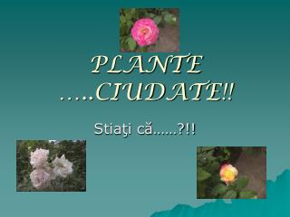 PLANTE …..CIUDATE !!