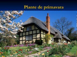 Plante de primavara