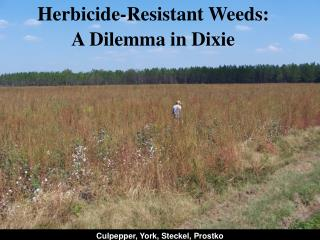 Herbicide-Resistant Weeds: A Dilemma in Dixie