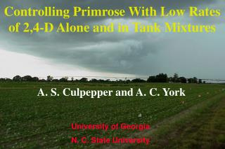 Controlling Primrose With Low Rates of 2,4-D Alone and in Tank Mixtures