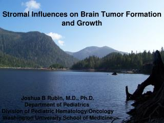 Stromal Influences on Brain Tumor Formation and Growth