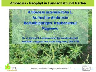 Ambrosia - Deckfolie