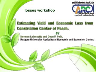 Estimating Yield and Economic Loss from Constriction Canker of Peach .
