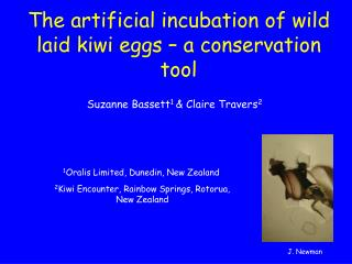 The artificial incubation of wild laid kiwi eggs � a conservation tool