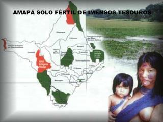 AMAPÁ SOLO FÉRTIL DE IMENSOS TESOUROS