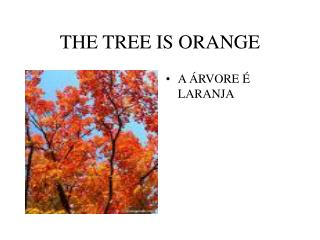 THE TREE IS ORANGE