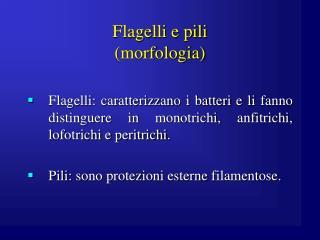 Flagelli e pili (morfologia)