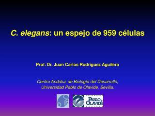 C. elegans : un espejo de 959 c�lulas