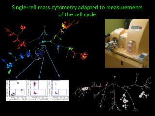 Single-cell mass cytometry adapted to measurements of the cell cycle