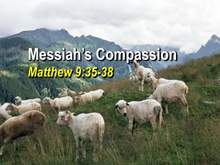 Messiah's Compassion Matthew 9:35-38