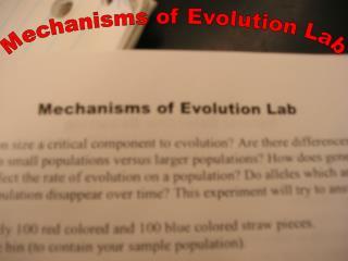 Mechanisms of Evolution Lab