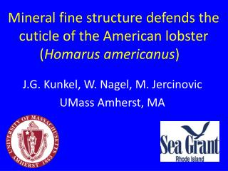 Mineral fine structure  defends  the  cuticle of the American  lobster ( Homarus americanus )