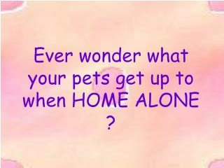 Ever wonder what your pets get up to when HOME ALONE