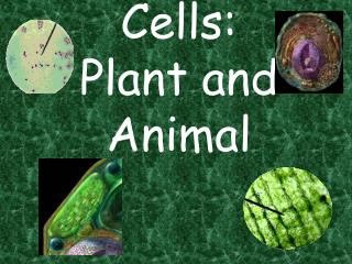 Cells: Plant and Animal