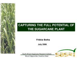 CAPTURING THE FULL POTENTIAL OF THE SUGARCANE PLANT