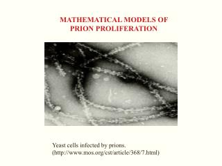 MATHEMATICAL MODELS OF  PRION PROLIFERATION
