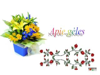 Apie gėles