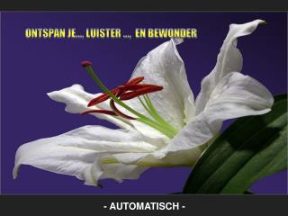 - AUTOMATISCH -