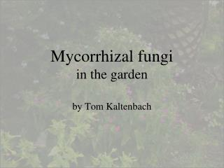 Mycorrhizal fungi  in the garden