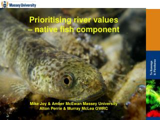 Prioritising river values    native fish component          Mike Joy  Amber McEwan Massey University Alton Perrie  Murra