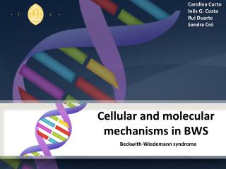 Cellular  and molecular  mechanisms  in BWS
