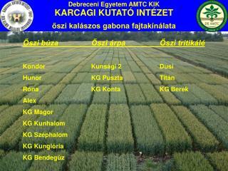Debreceni Egyetem AMTC KIK KARCAGI KUTATÓ INTÉZET őszi kalászos gabona fajtakínálata