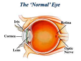 The 'Normal' Eye