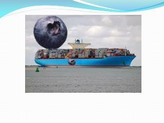 Transporte marítimo de fruta