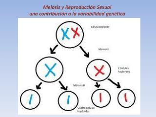 Meiosis y Reproducción Sexual una contribución a la variabilidad genética