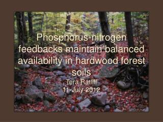Phosphorus-nitrogen feedbacks maintain balanced availability in hardwood forest soils